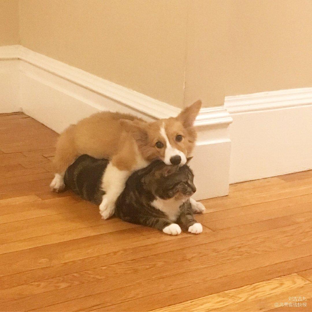 猫狗🐱🐶双全的日常