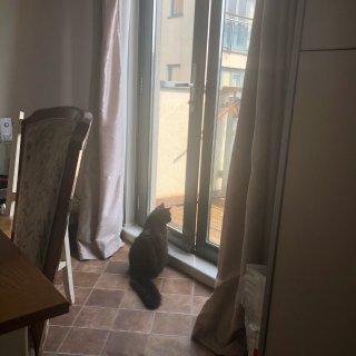 云撸猫一下吧