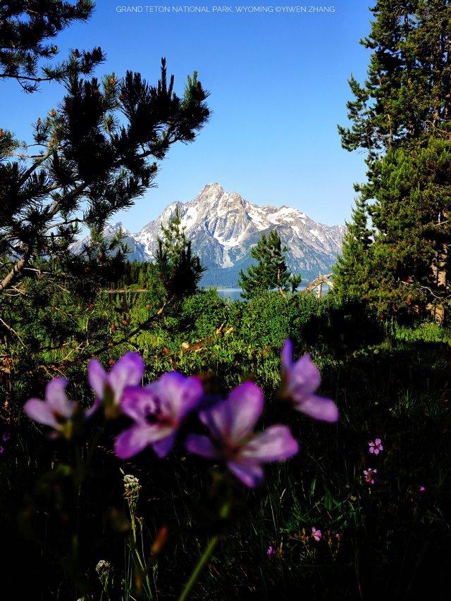 探索路边、山上的野花朵朵,生机盎然...
