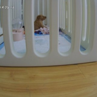 Furbo 小狗摄像头...