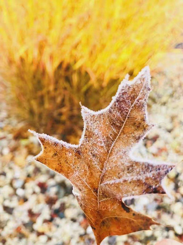 下霜了飘❄️了,今年这个冬天来的有...