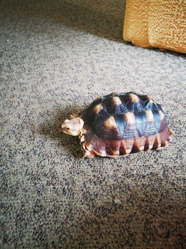 又是悠闲的一天-----龟宝宝日常