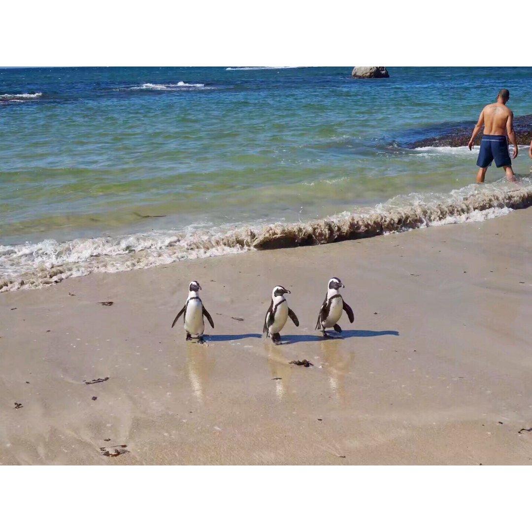 超级治愈人心的小企鹅