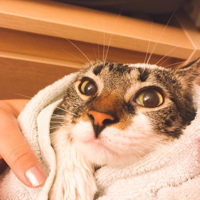 教程|如何优雅的给猫主子洗澡🛁(这...