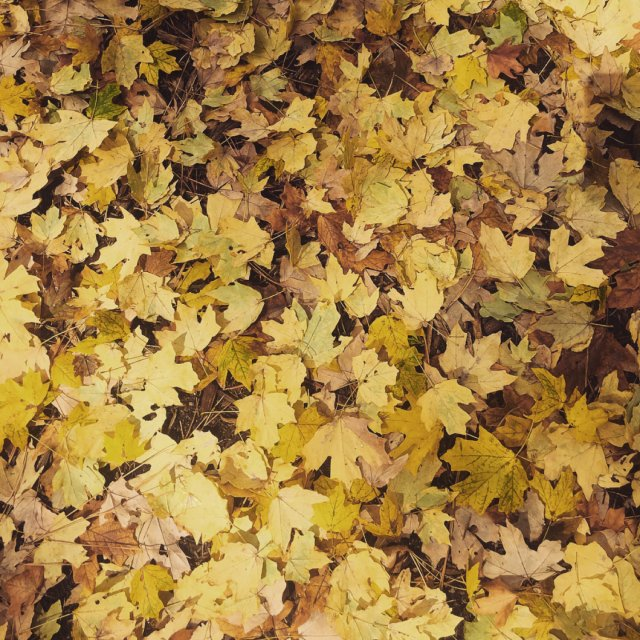 拍照+后期 | 每一片树叶都是秋天...