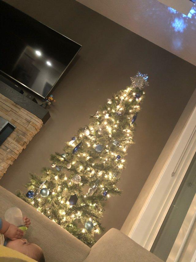 在店里看到这棵树200 树梢带白 ...
