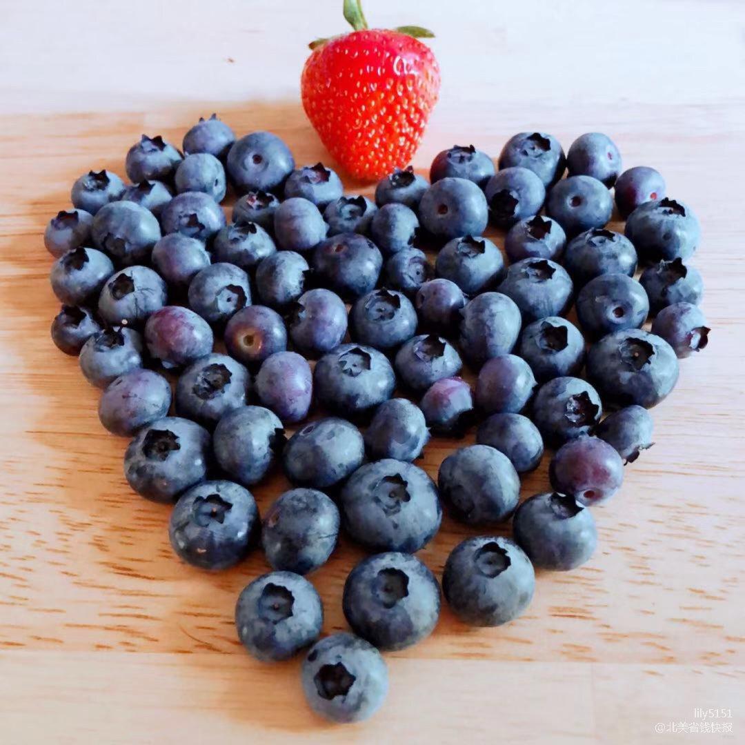 蓝莓收获,与鸟儿抢食