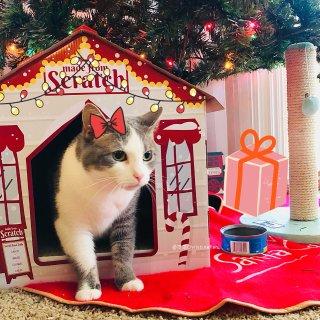 Caramel的圣诞礼物🎁开心到模糊🤪...