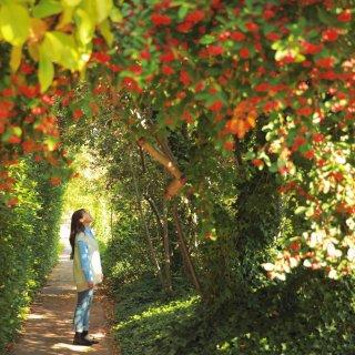 澳洲|堪培拉超美的枫叶大赏🍁开始啦!...