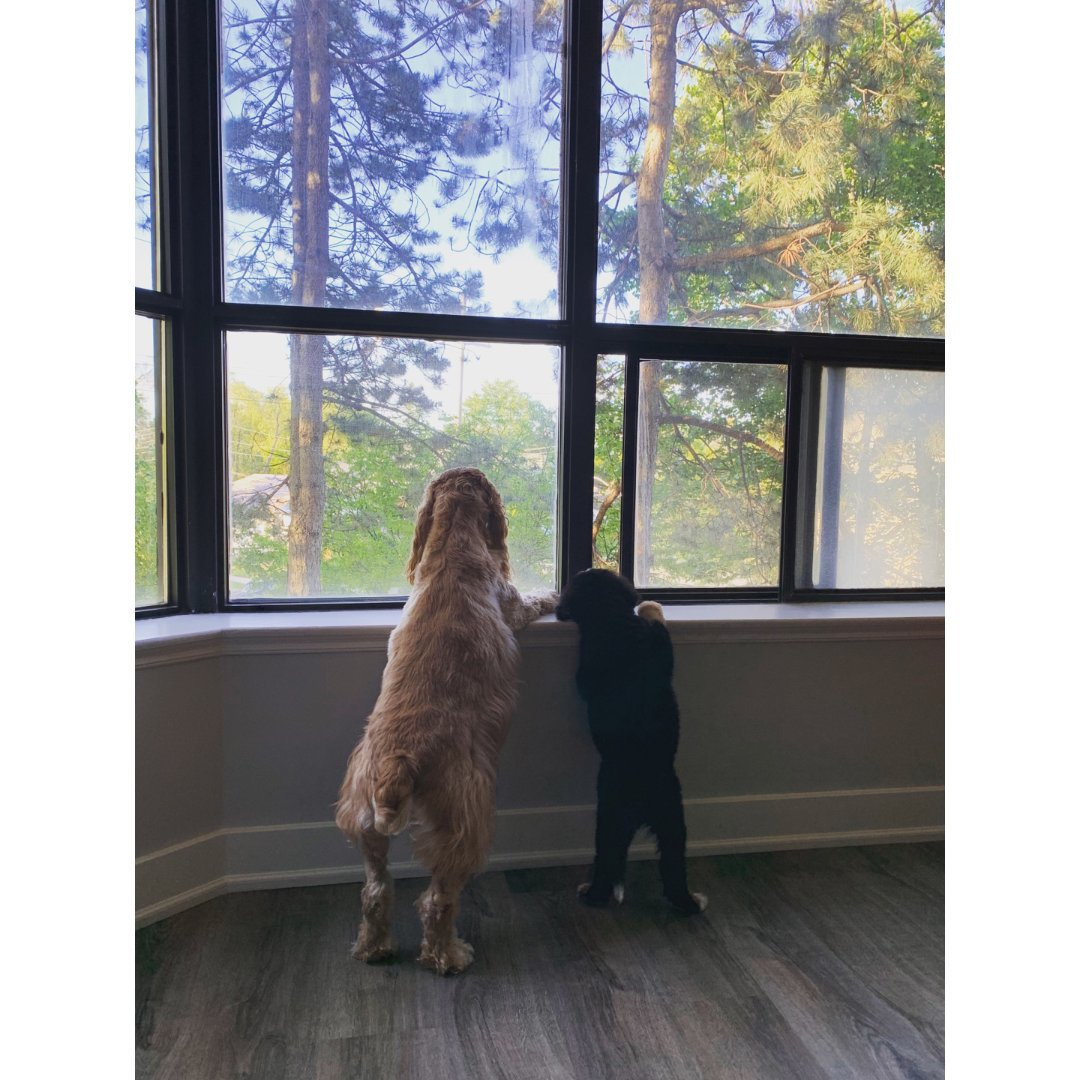 养两只狗是什么样的体验-我想说真的...