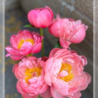 好久家里没鲜花出现了,看这几朵芍药好治愈...