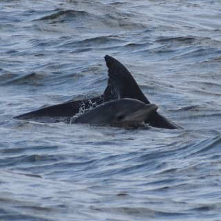Cape may 遇见海豚🐬...