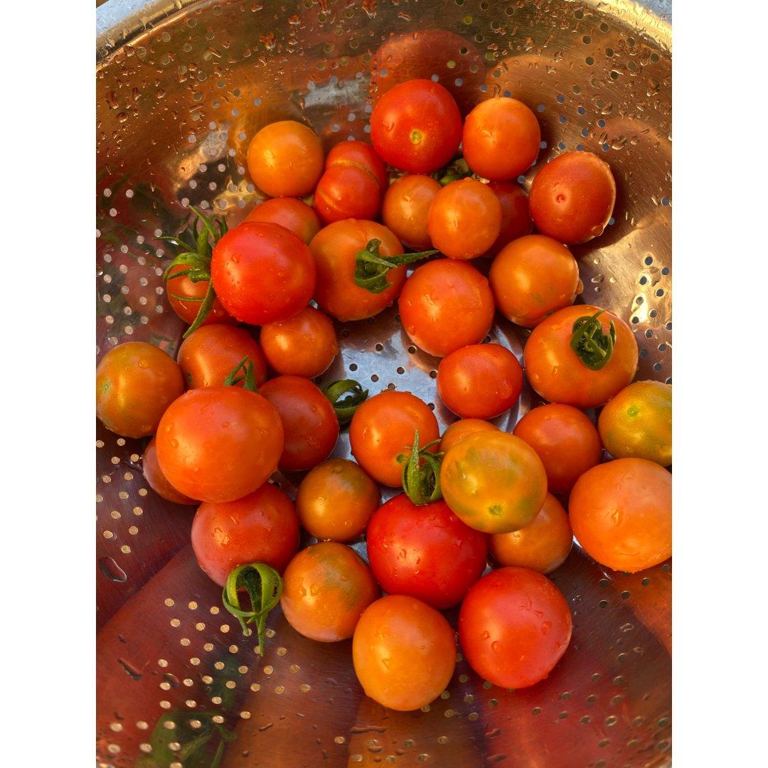 我们家的小番茄🍅