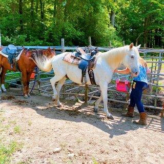 紐約周邊 騎馬去 Top View Ri...