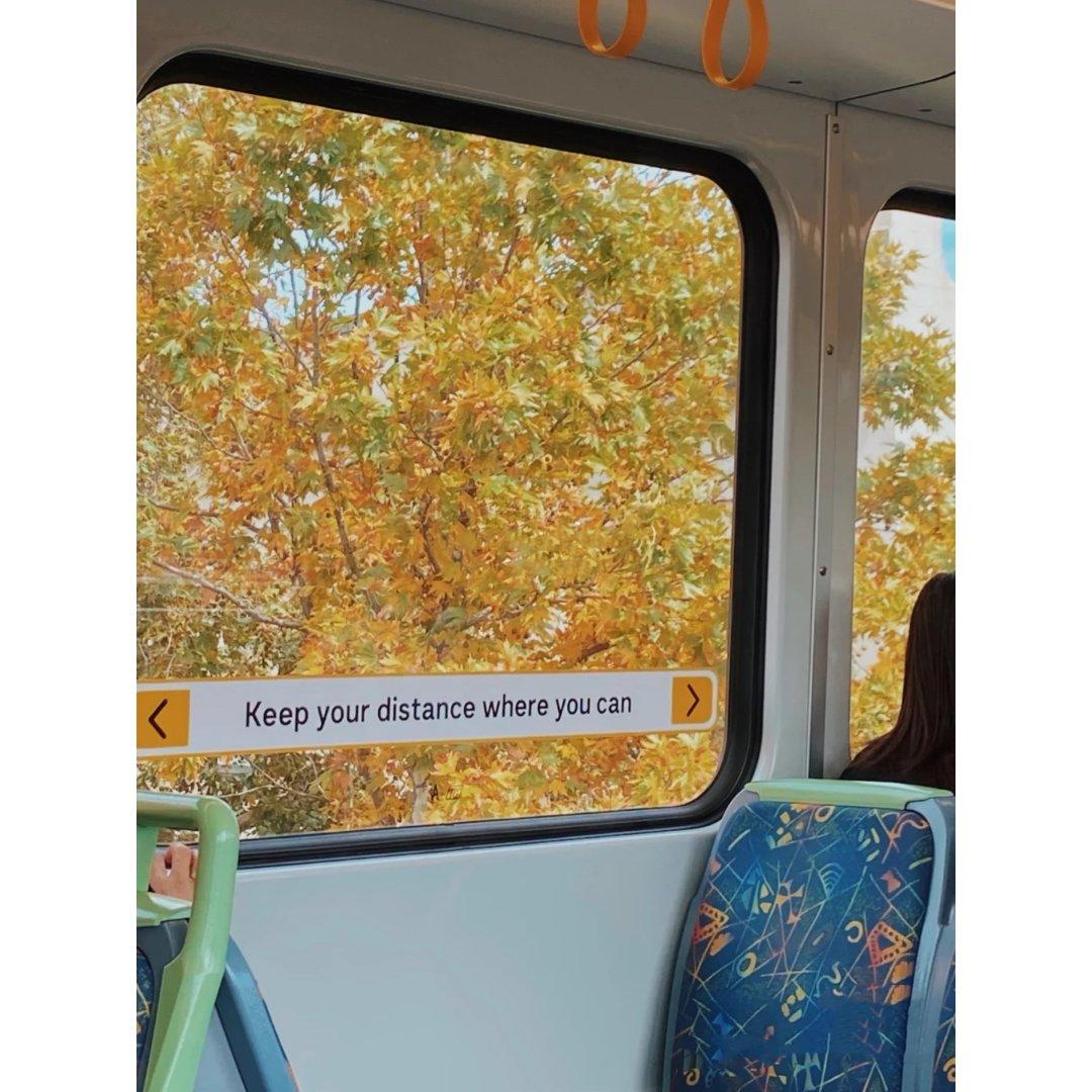 墨尔本的秋天🍂...