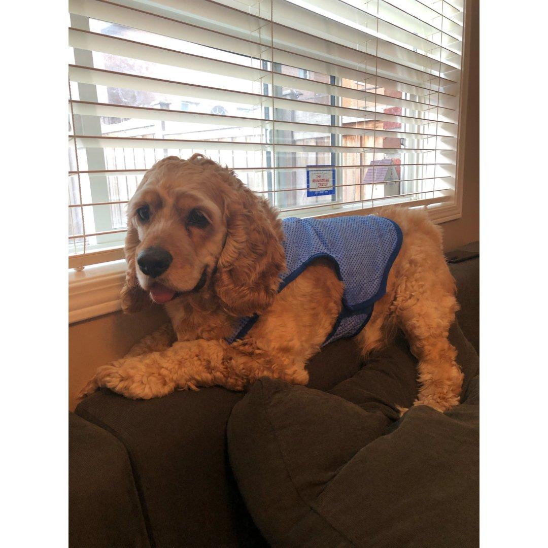 夏日必备防暑降温衣 我家狗子是全世界最好...
