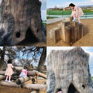 大树洞平衡木