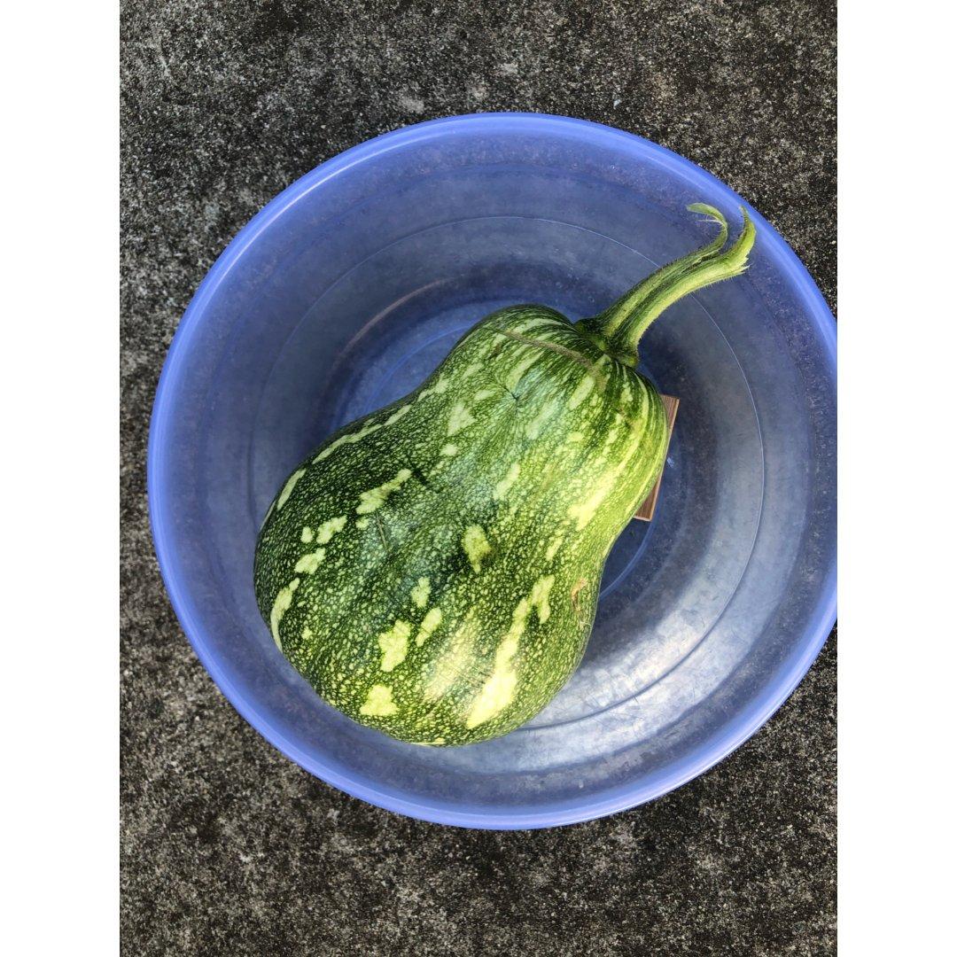 收获日———跟脸盆一样大的南瓜