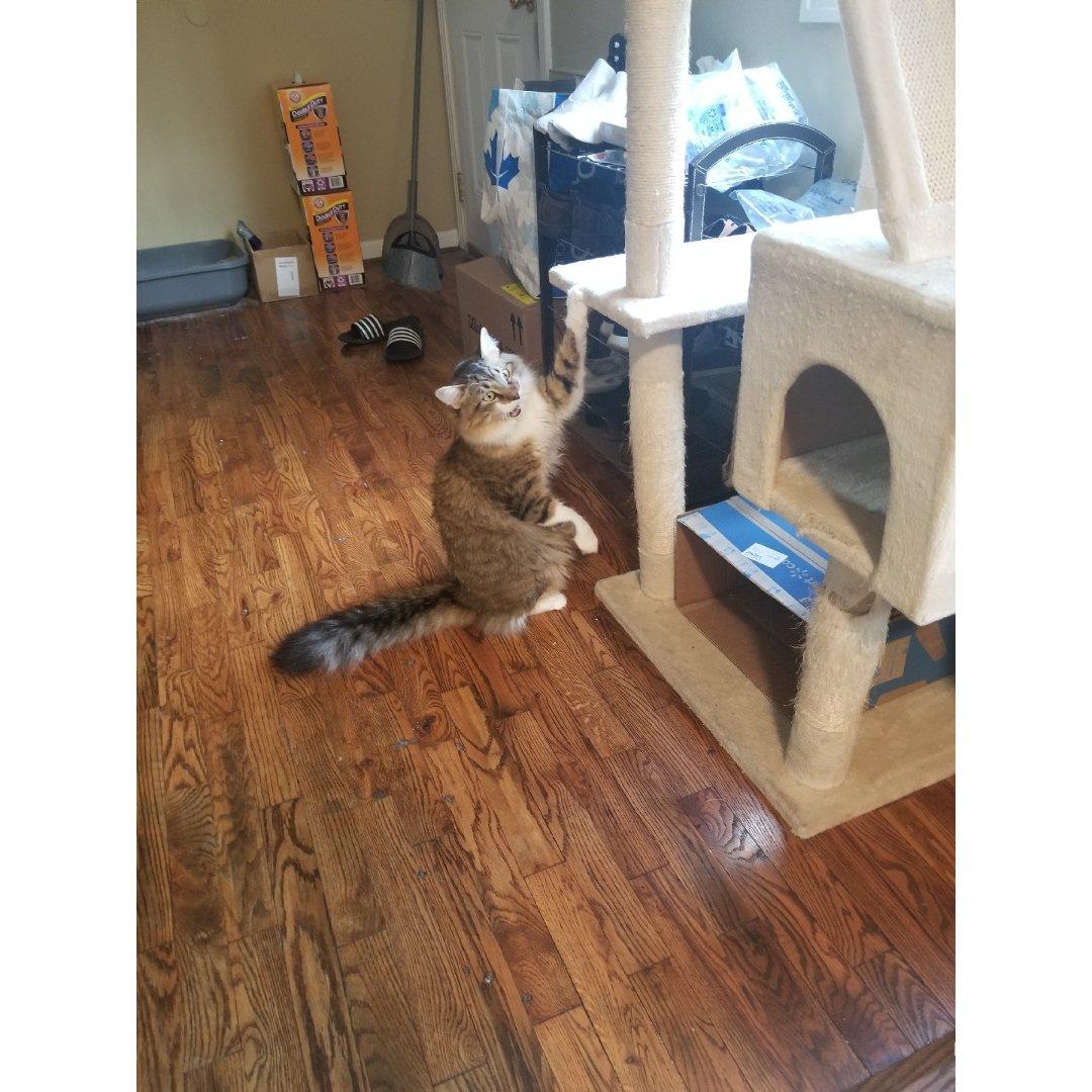 养猫小日常:弟弟最近特别喜欢这个姿势