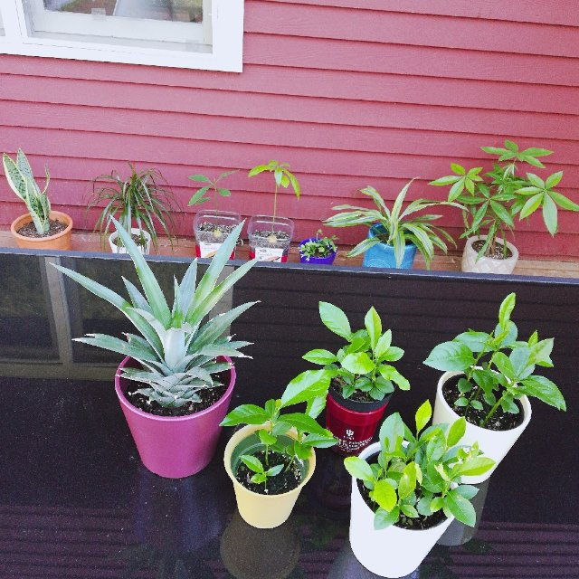 晒晒夏日暴长的绿植们🌱