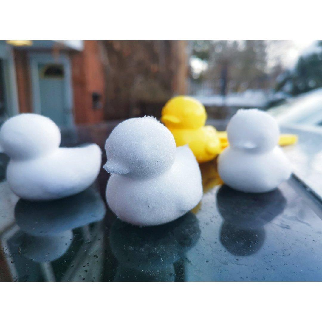 嘎嘎嘎!!! 门前车车上游过一群鸭🦆🦆🦆