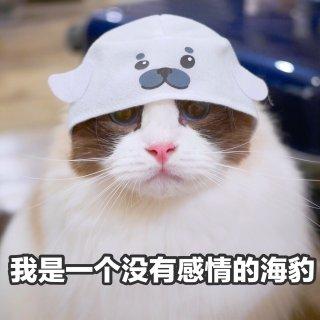 猫咪主食冻干 Stella & Chew...