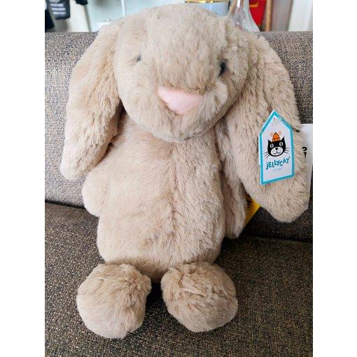 兔兔来报道🐰