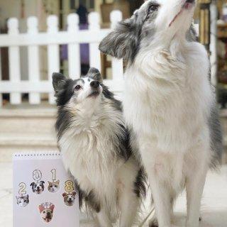 来晒家里的两只狗狗啦!...