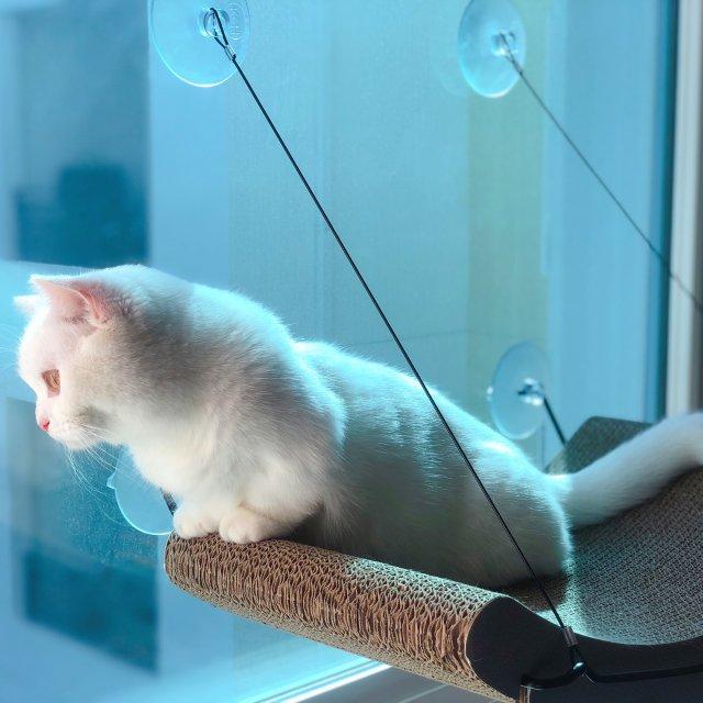 【猫咪吊床推荐】廿廿从第一天就爱上❤️