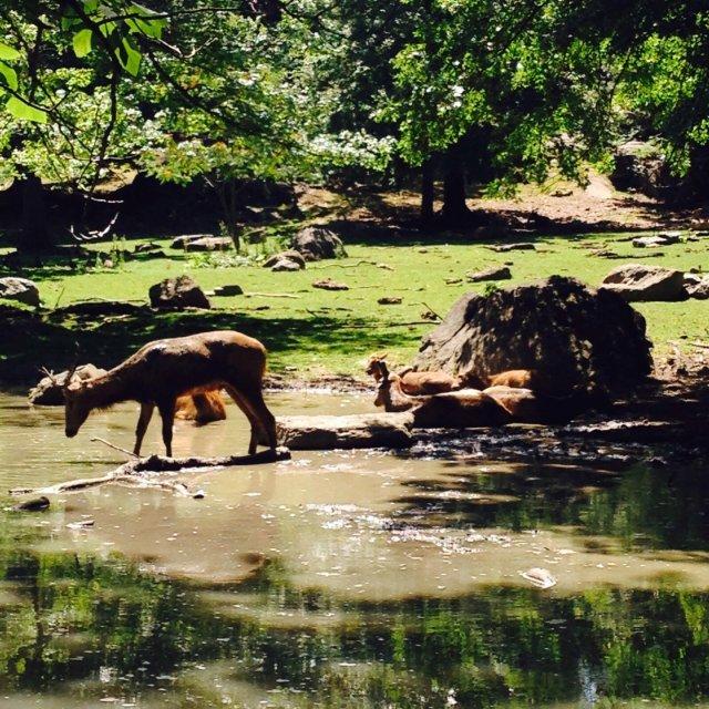 世界最大都市动物园 Bronx Zoo