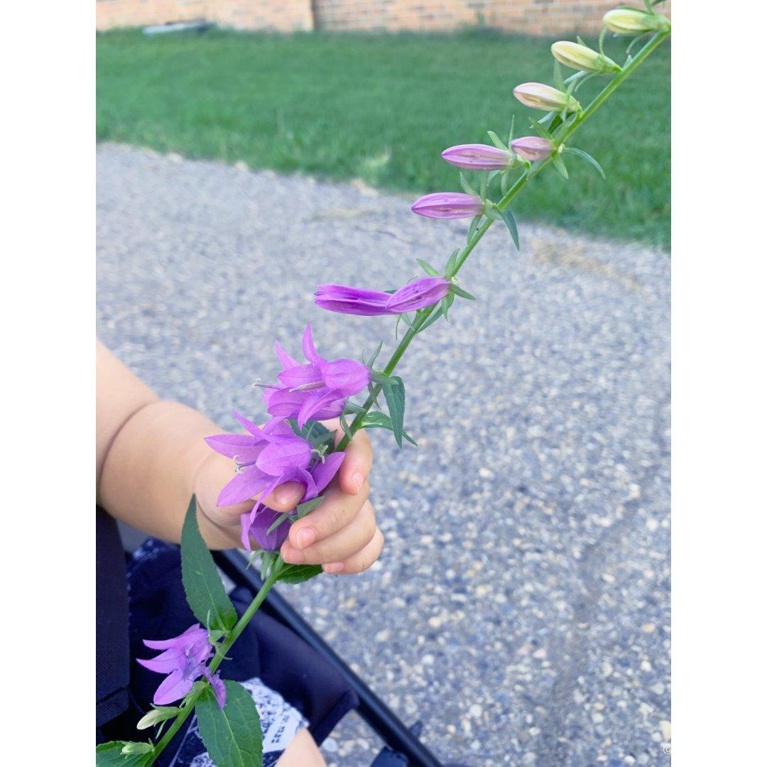 小花花好美