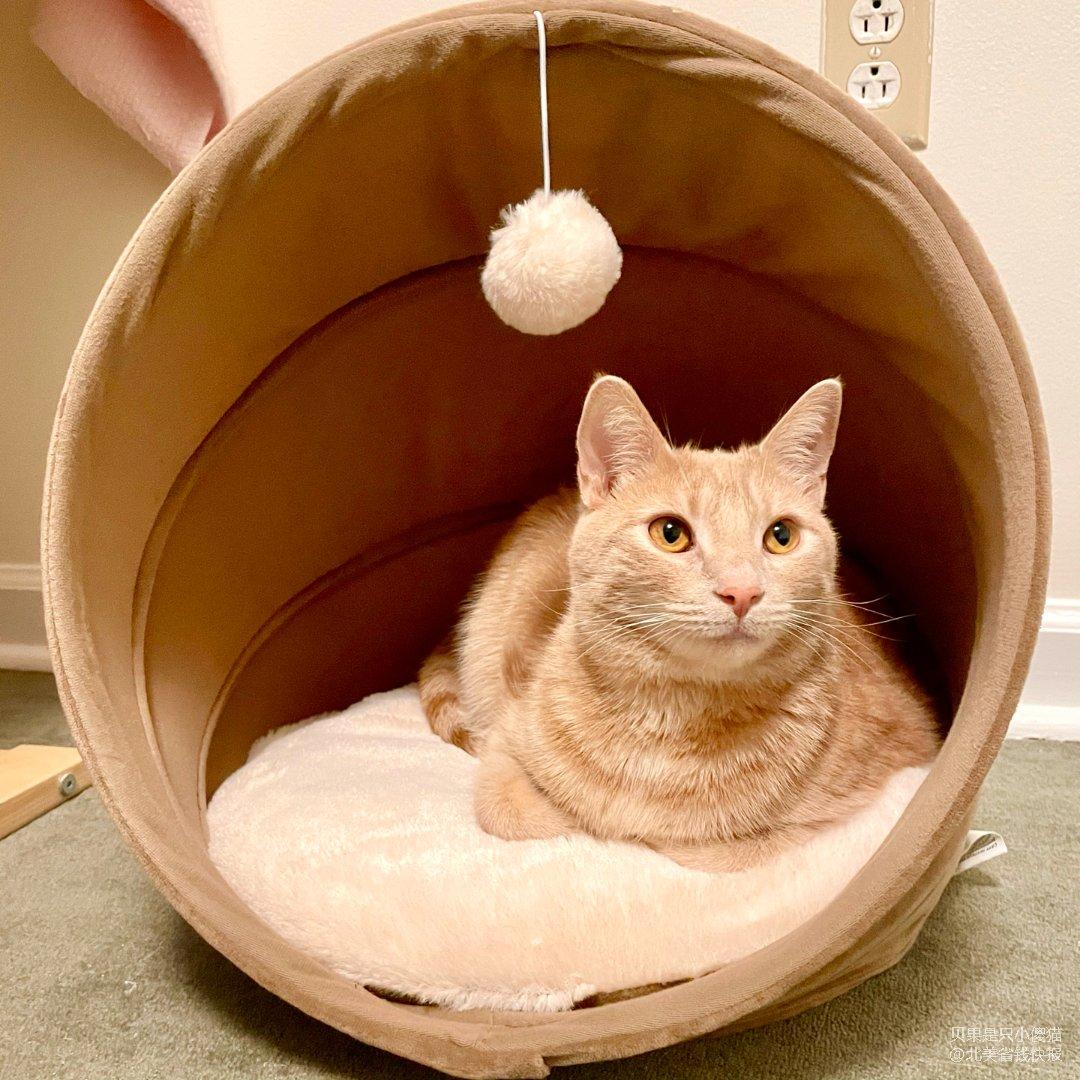 同事送给小猫的圣诞礼物🎁