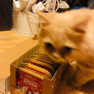 惊天Bug价抢到Lily's Kitch...