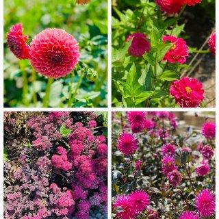 湾区|Gamble Garden每月一次...