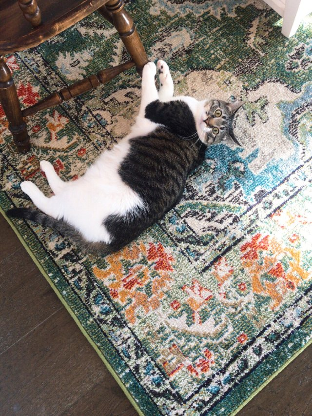 Wayfair|打骨折入的地毯~明...