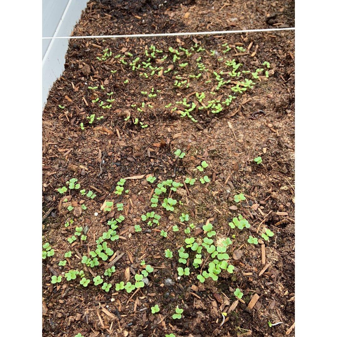 小菜园更新