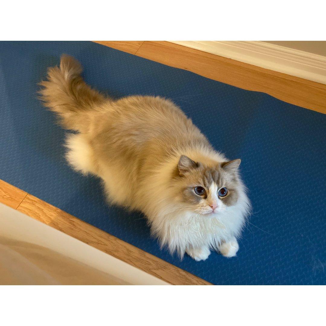 最暖和的过冬神器就是猫子呀!