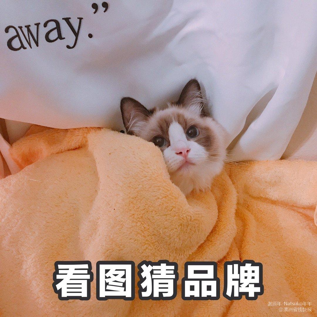 猫咪生骨肉推荐:Radcat(天冷...