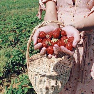 hi你的🍓熟了,不能错过的北欧草莓...