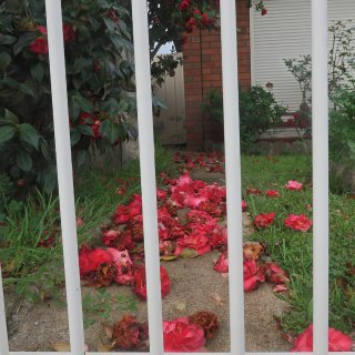 家附近的花都开了...
