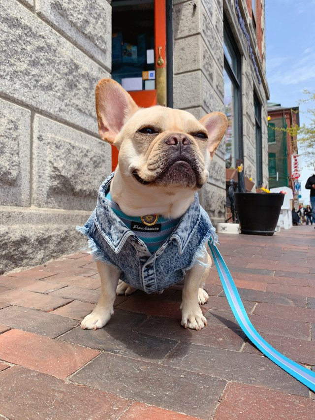 Portland ME 带着狗狗旅...