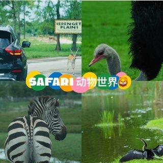 Lion Country Safari Bulwagi's Flying Safari Ride