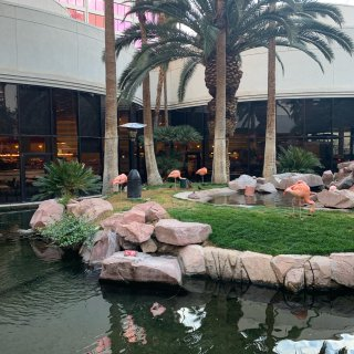 粉粉的Flamingo Vegas旅行打...