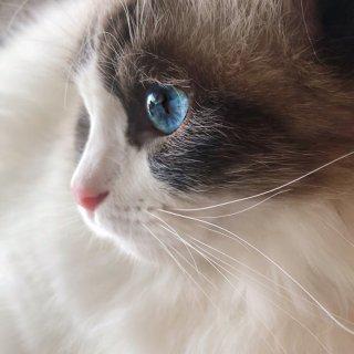 🍑养猫到底让我的生活有什么变化?(猫咪用...