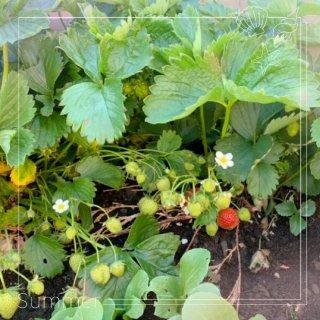 🌿我的后花园最爱🌱...