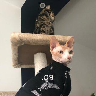宅家拍猫片