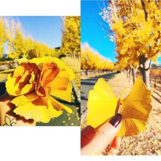 🍁湾区的秋天/Napa...