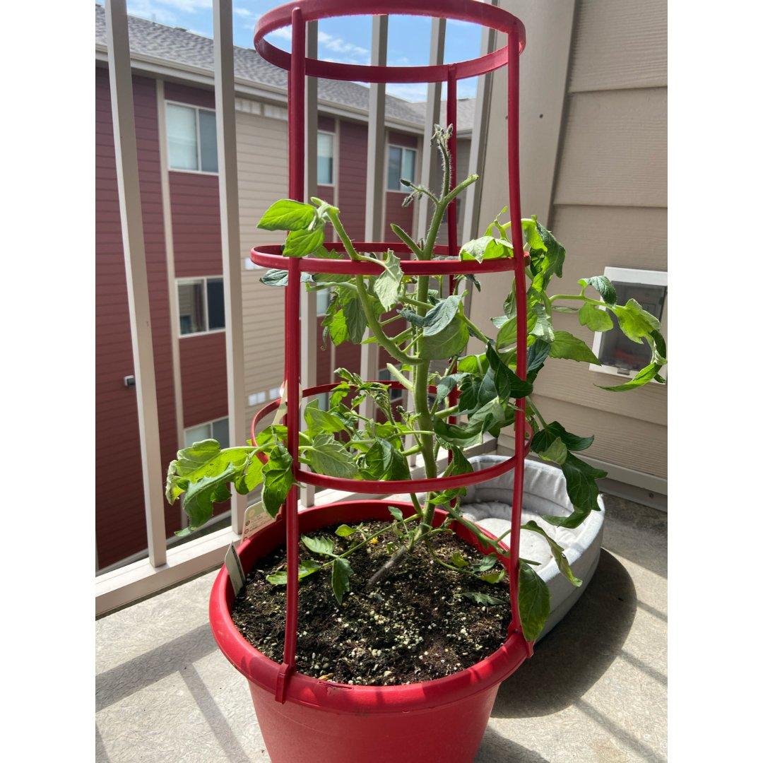尝试阳台种蔬果我能成功收获吗?