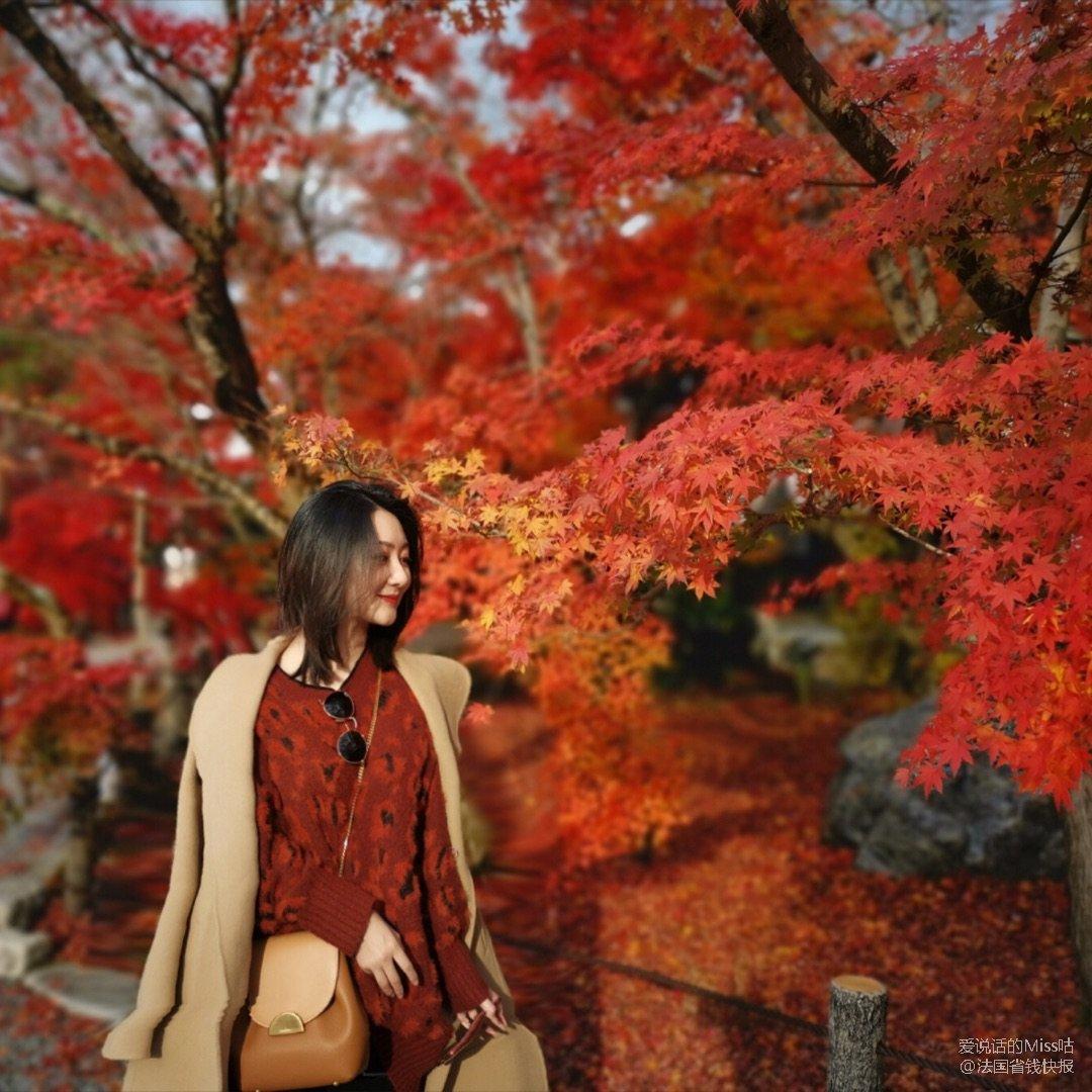 """京都最美红叶名所""""永观堂""""棒呆!推..."""