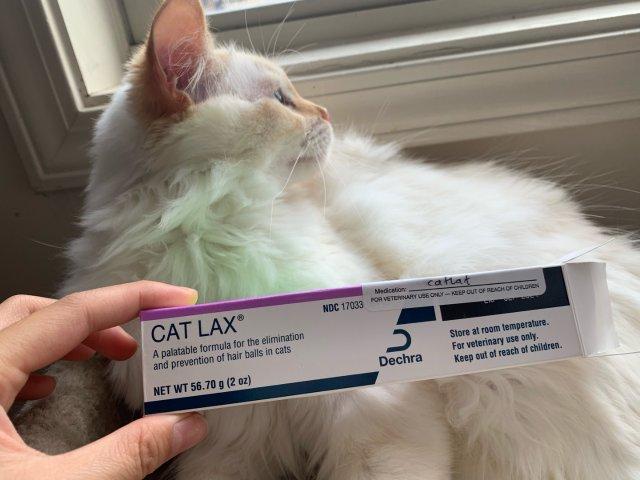 猫咪一直在咳嗽?!